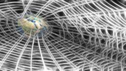 Geben und Nehmen - Das Internet