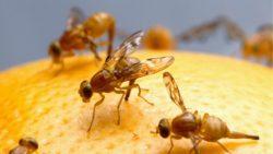 Eine Fruchtfliegenfalle selber machen