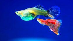 Aquarienfische - Die Qual der Wahl