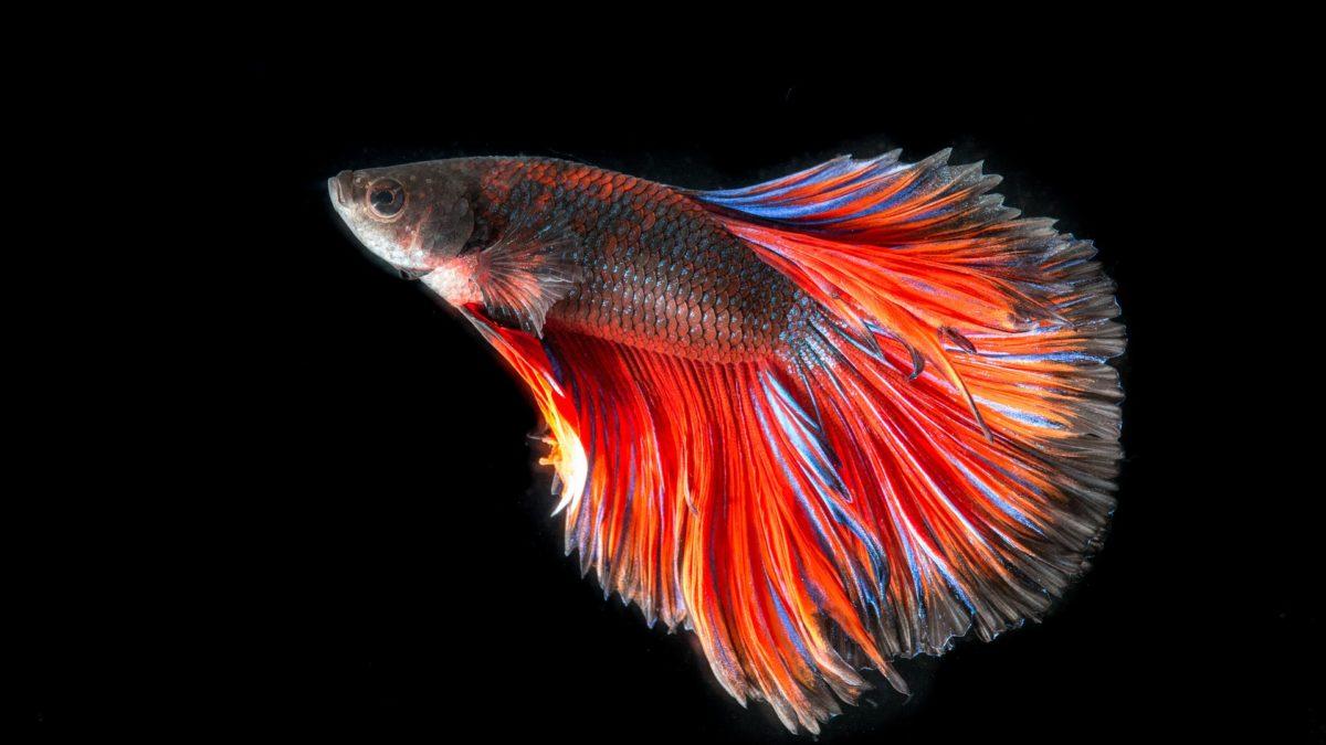 Aquarienfische - Die Qual der Wahl auf konsumguerilla.net