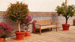 Terassenpflanzen - mediterranes Ambiente