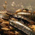 Schädlinge, Parasiten und Ungeziefer